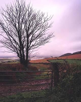 Photograph - Skeletal Tree And Pink Sky by Steve Swindells