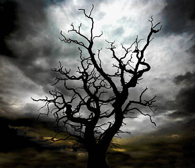 Photograph - Skeletal Tree by Meirion Matthias