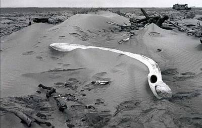 Skeleton Coast Whalebone Art Print by Susan Chandler
