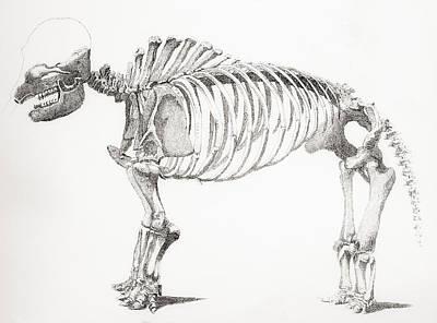 Genus Drawing - Skeleton Of A Mastodon, An Extinct by Vintage Design Pics