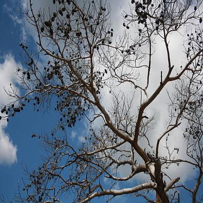 Photograph - Skeleton Of A Pine Tree Against Sky And Clouds by Tracey Harrington-Simpson
