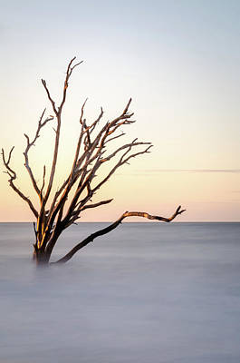 Photograph - Skeleton Tree In The Ocean by Serge Skiba