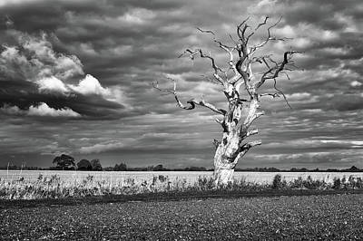 Photograph - Skeleton Tree by James Billings