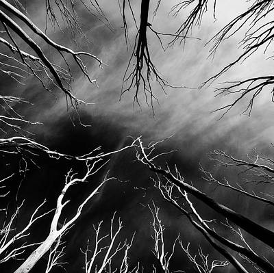 Photograph - Skeleton Trees  by Mihai Florea