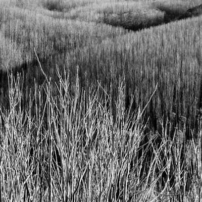 Photograph - Skeleton Tress 2 by Mihai Florea