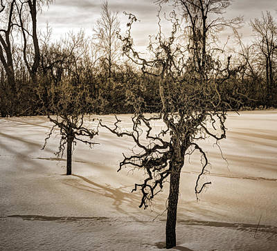 Photograph - Skeletons Of Winter 3 by Michael Colgate