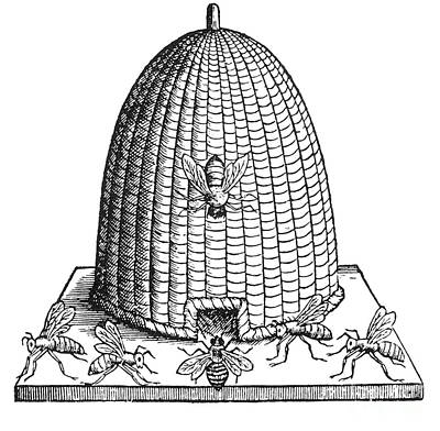 Skep Beehive, 17th Century Art Print