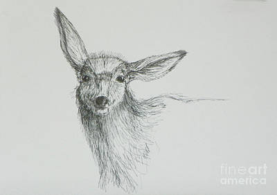 Drawing - Sketch Of A Mule Deer Doe by Dawn Senior-Trask