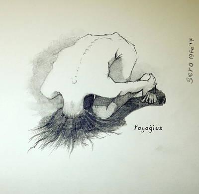 Sketch Of Sera.10.03 Original by Ray Agius