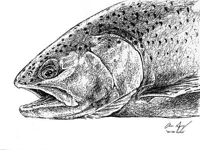 Drawing - Sketch - Rainbow Trout by Aaron Spong