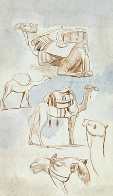 Drawing - Sketch Studies Of Camels by Edward Lear