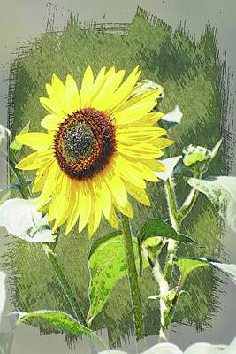 Photograph - Sketchy Sunflower 1 by Marty Koch