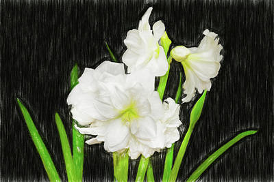 Photograph - Sketchy White Amaryllis  by Kay Brewer