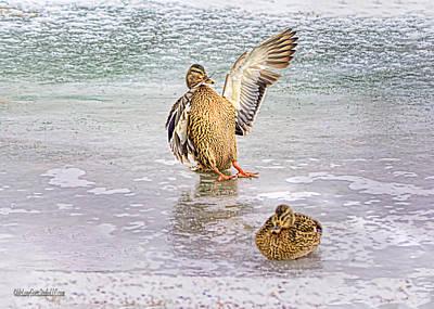 Photograph - Skid Row Duck by LeeAnn McLaneGoetz McLaneGoetzStudioLLCcom