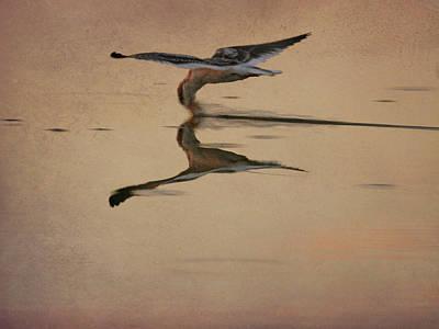 Photograph - Skimmer by Charles McKelroy