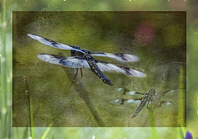 Photograph - Skimmer Dragonfly by Belinda Greb