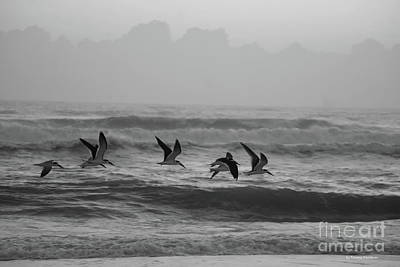 Photograph - Skimmers In Flight by Tannis Baldwin