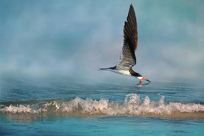 Photograph - Skimming Off The Top 2 by Donna Kennedy