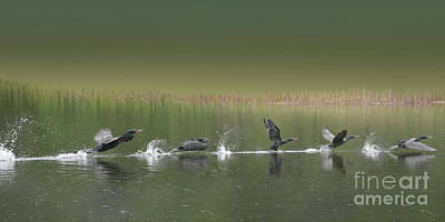 Photograph - Skimming On Top by Vivian Martin