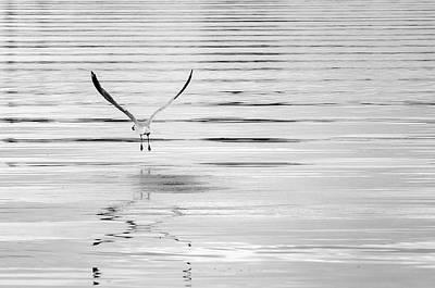Photograph - Skimming by Susan McMenamin
