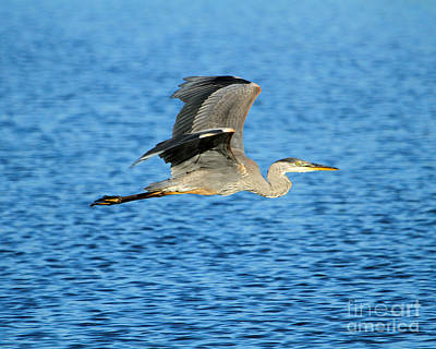 Photograph - Skimming The Lake by Heather King