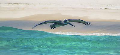 Photograph - Skimming The Shore by Debra Forand