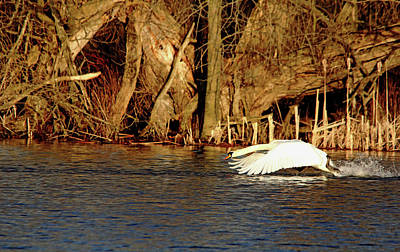 Photograph - Skimming The Water by Debbie Oppermann