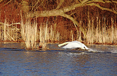 Photograph - Skimming The Water I by Debbie Oppermann