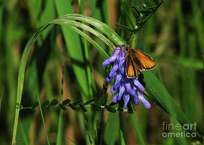 Skipper Butterfly Art Print by Deborah Johnson