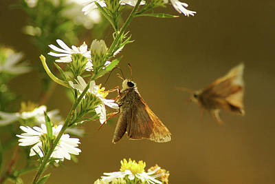 Photograph - Skipper Date by Thomas Bomstad
