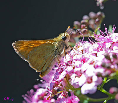 Pink Photograph - Skipper by Gary Wing