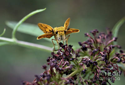 Photograph - Skipper II by Douglas Stucky