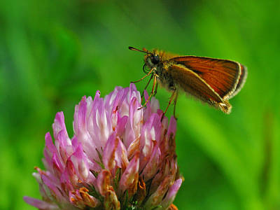 Photograph - Skipper by Juergen Roth