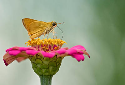 Photograph - Skipper by Linda Shannon Morgan