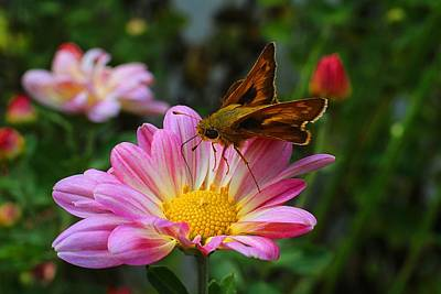 Photograph - Skipper On Daisy Mum by Kathryn Meyer