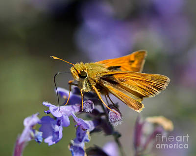 Photograph - Skipper Takes A Drink by Kerri Farley