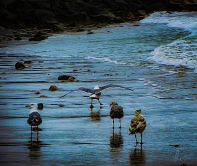 Photograph - Skipping Gull by Bruce Carpenter