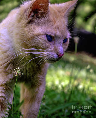 Photograph - Skippy Feral Cat Portrait 0369b by Ricardos Creations