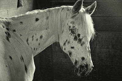 Photograph - Skittles Spots by JAMART Photography