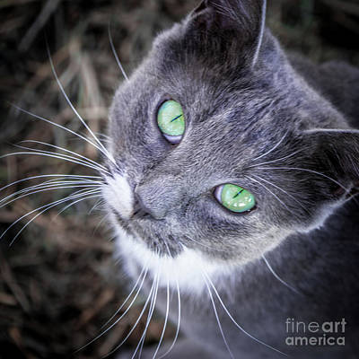 Photograph - Skitty Green Eyes by Cheryl McClure