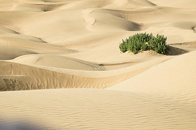 Photograph - Skn 1406 The Mounds And Dunes by Sunil Kapadia