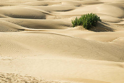Photograph - Skn 1419 The Soft Sanddunes by Sunil Kapadia