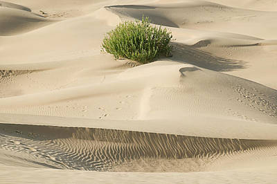 Photograph - Skn 1439 The Sandscape by Sunil Kapadia