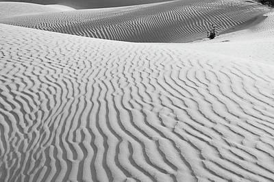 Photograph - Skn 1457 Nature's Composition by Sunil Kapadia