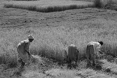 Photograph - Skn 2619 Hard Toil B/w by Sunil Kapadia