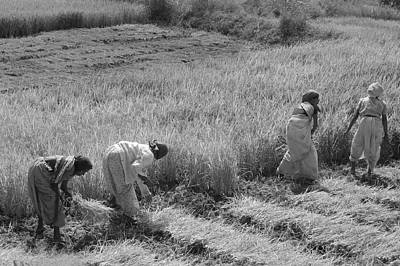 Photograph - Skn 2620 Dedicated To Farming Bw by Sunil Kapadia