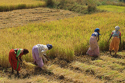 Photograph - Skn 2620 Dedicated To Farming Color by Sunil Kapadia