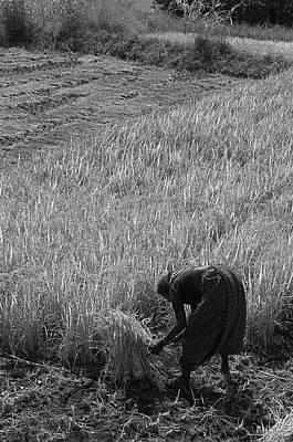 Photograph - Skn 2622 Yet Lots To Cut B/w by Sunil Kapadia