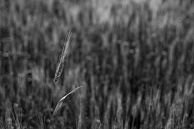 Photograph - Skn 6453 Standing Out B/w by Sunil Kapadia