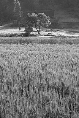 Photograph - Skn 6456 Wheat Field B/w by Sunil Kapadia